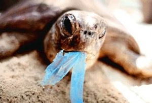 turtle_plastic